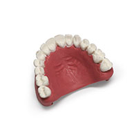 Laerdal MegaCode Kelly Upper Teeth