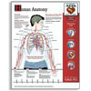 Wall Poster-Rescue Anatomy