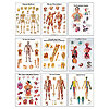 3B Scientific  Anatomical Chart Set