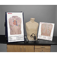 Life/form® Deluxe Auscultation Training Station