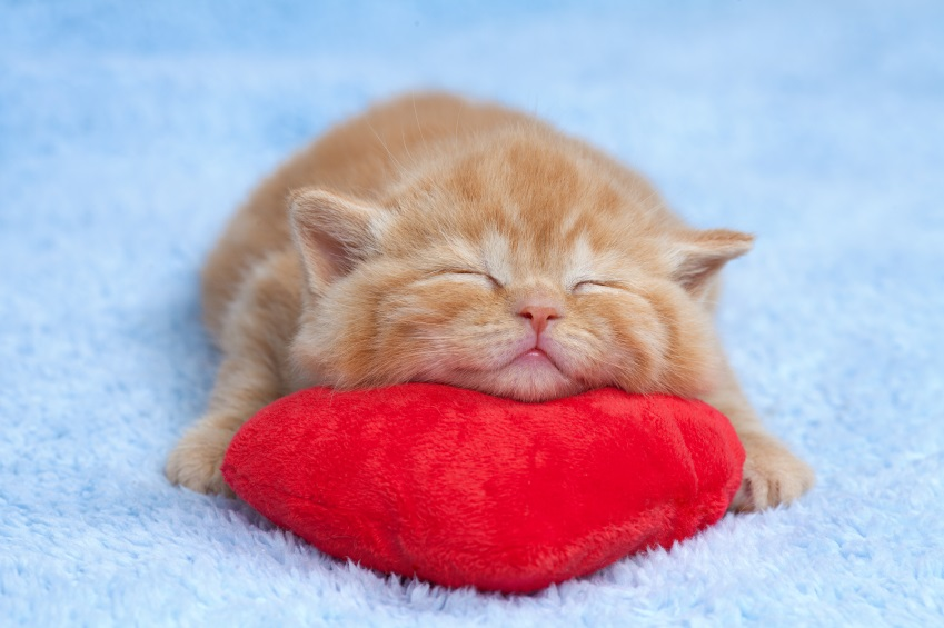 kitten with heart